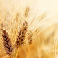 Be Part of the Harvest-Episode 43
